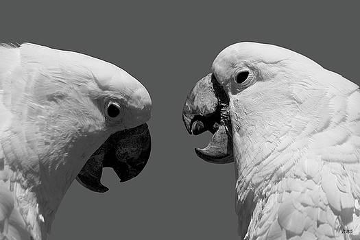 Face to Face IV BW by David Gordon