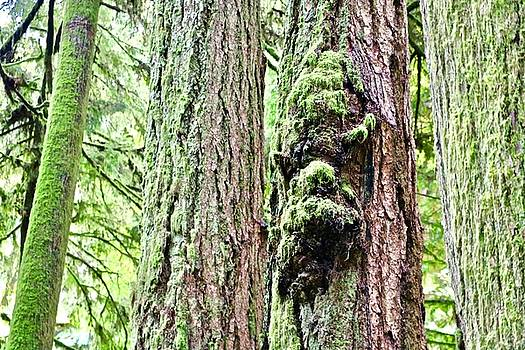 Faces in the Trees by Brian Sereda