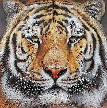 Elena Kolotusha - Faces of the Wild - Amur Tiger