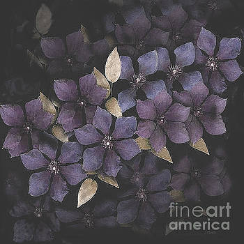 Faded Clematis by J Marielle
