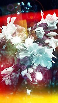 Faded dreams by Mikko Tyllinen