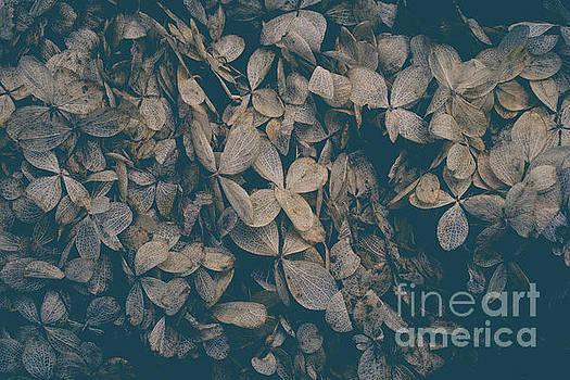 Faded Flowers by Edward Fielding