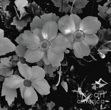 LeLa Becker - Faded flowers