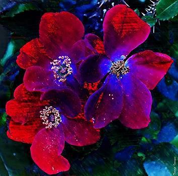 Faded In Red by Wesley Nesbitt