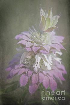 Faded Purple by Lisa Holmgreen