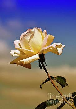 Fading October Rose by Wanda-Lynn Searles