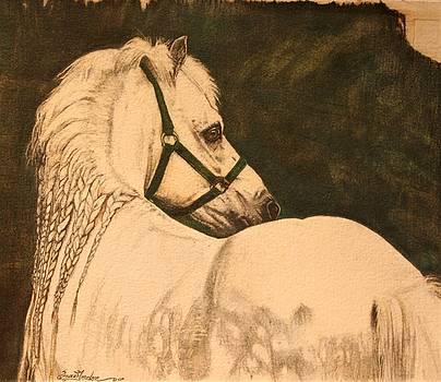 Fair Braids- Welsh Pony by Susie Gordon