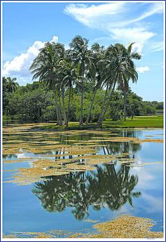 Fairchild Gardens by John Rowe