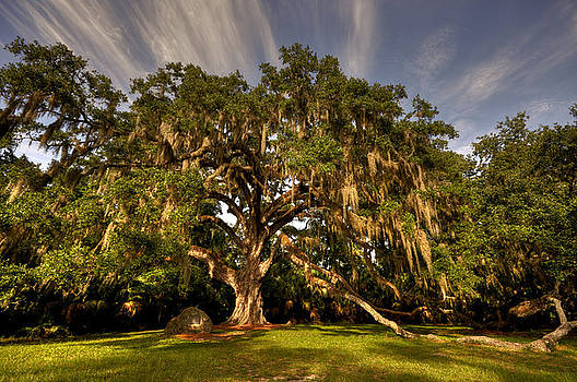 Fairchild Oak by Andrew Armstrong  -  Mad Lab Images