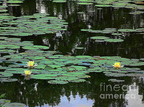 Fairmount Park lily pond by Daun Soden-Greene