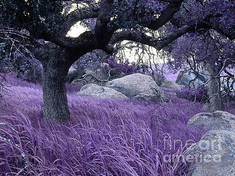 Fairy Forest by Robert Ball