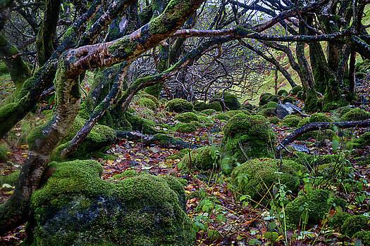 Guy Shultz - Fairy Glen Trail