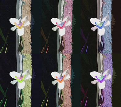 Stan  Magnan - Fairy Iris X Six