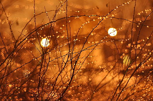 Fairy Lights by Sara Kennedy