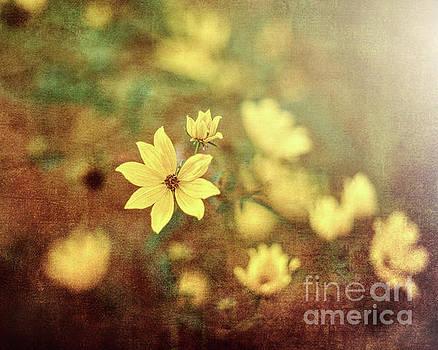 Fairy Tale Meadow by George Oze