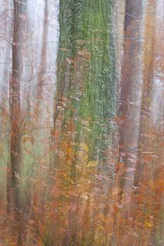 Fairy Tree by Karen Van Der Zijden