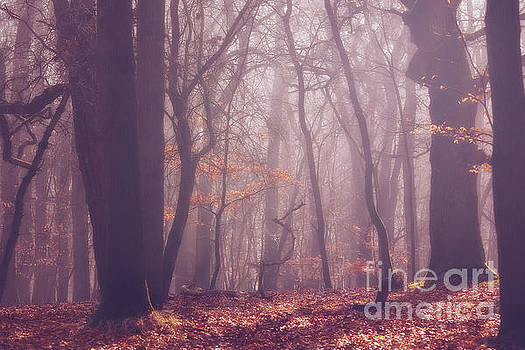 LHJB Photography - Fairy woods....