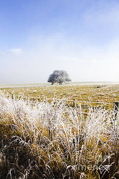 Fairytale winter in Fingal by Jorgo Photography - Wall Art Gallery