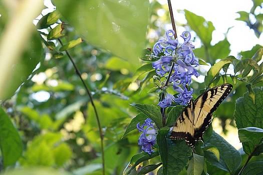 Faith Of A Butterfly by Kristina Randal