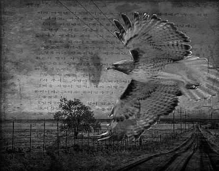 Falcon Flight by Nadine Berg