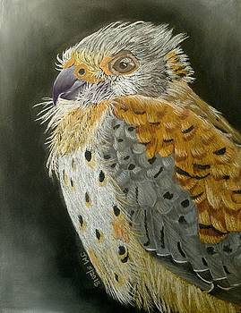 Falcon by Joan Mansson
