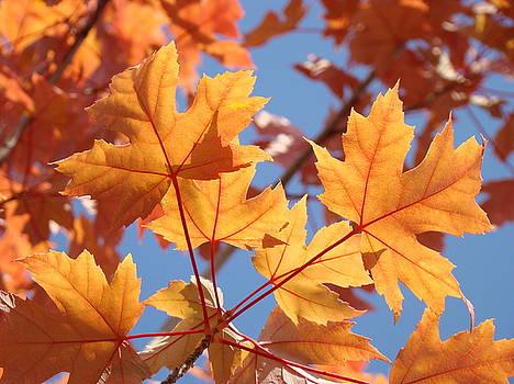 Baslee Troutman - FALL ART Orange Autumn Leaves Blue Sky Baslee Troutman