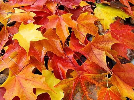 Baslee Troutman - Fall Art prints Red Orange Yellow Autumn Leaves Baslee Troutman