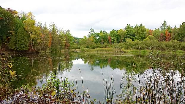 Fall at a Small Pond by Susan Wyman