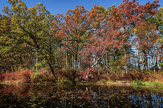 Fall at Holler Pond by CJ Schmit