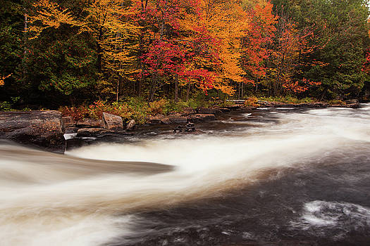 Fall at Oxtongue Rapids by Peter Pauer