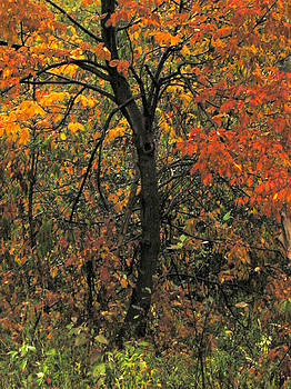 Fall at Wycocomagh by Lori  Secouler-Beaudry