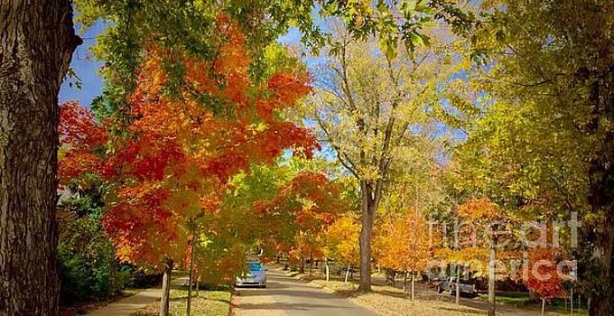 Fall Beauty Maplton Hill  by R Mahlouji