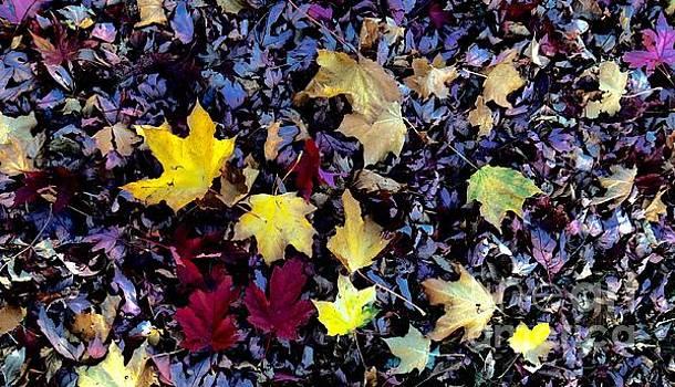 Fall Beauty by R Mahlouji