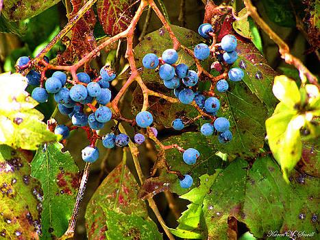 Karen Scovill - Fall Berries