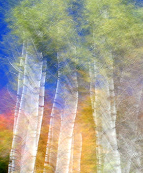 Fall Birches by Doug Hockman Photography