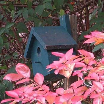 Fall Blueberry Bush Red By Tammy by Tammy Finnegan