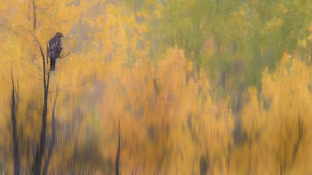 Fall Blur by Kelly Marquardt