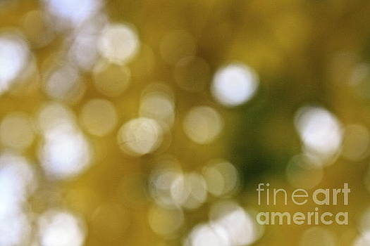Fall Bokeh by Arelys Jimenez
