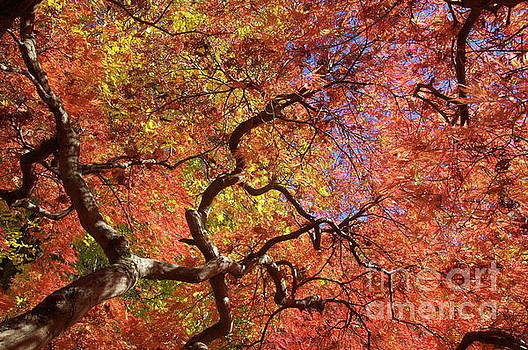 Fall Branches by Mark Messenger