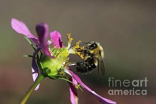 Fall Bumblebee   by Yumi Johnson
