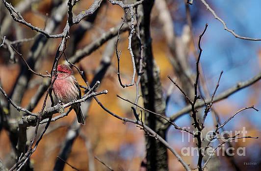 Fall Bird 2 by Diane Friend