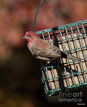 Fall Bird 4 by Diane Friend