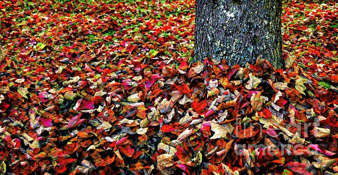 Fall Carpet by Deena Athans