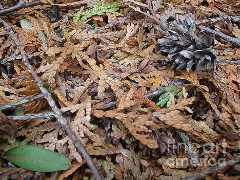 Fall Carpet V3 by Iris Newman