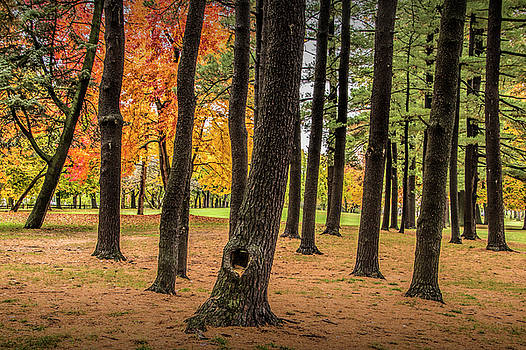 Randall Nyhof - Fall City Park Scene in with Pine and Maple Trees