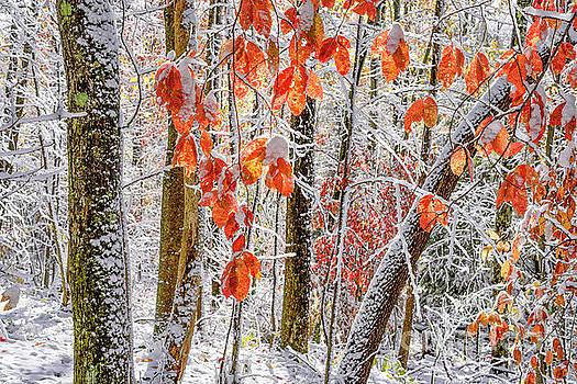 Fall Color Autumn Snow by Thomas R Fletcher