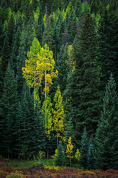 Rick Strobaugh - Fall Color in the Forest