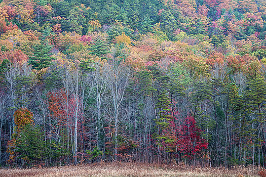 Fall Color in the Smokies by David Morel