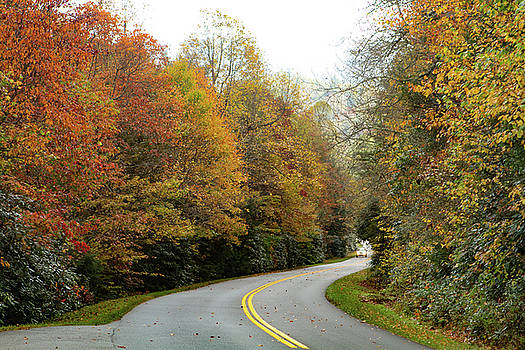 Fall Color Popping by Karen Ruhl