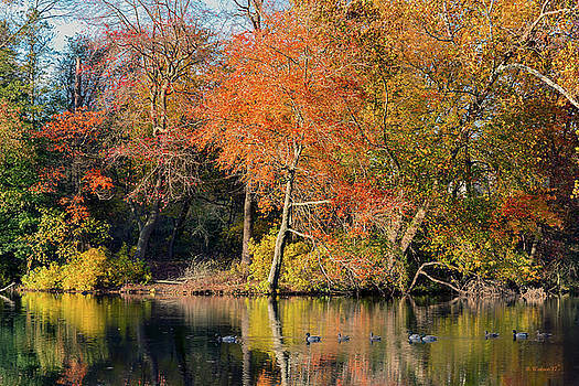 Fall Color Reflections by Brian Wallace